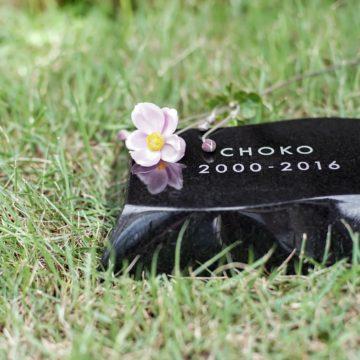 ペットのお墓(庭に埋める)